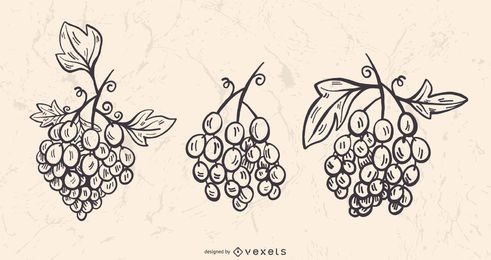 Grapevine Stroke Vector Set