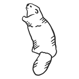 Doodle de rabo de castor