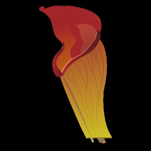 Carnívora brisa del sol sarracenia jarra planta atrapamoscas plana Transparent PNG