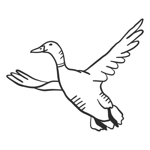 Duck drake wild duck beak wing flying doodle Transparent PNG