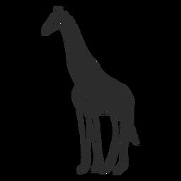 Giraffe vor Ort Hals Ossicones Schwanz Gekritzel