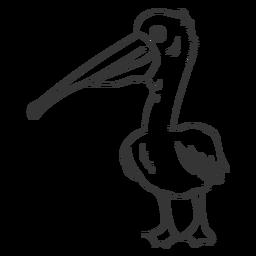 Trazo de ala de pluma de pico de pelícano