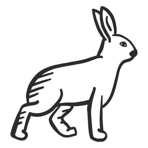 Conejo Bunny oreja hocico doodle Transparent PNG
