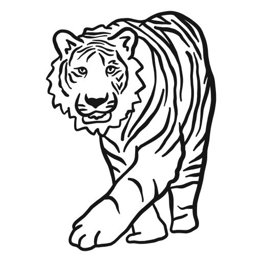Tigre hocico raya oreja Doodle Transparent PNG
