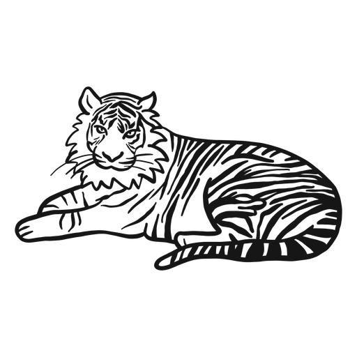 Tiger muzzle stripe ear tail lying doodle Transparent PNG