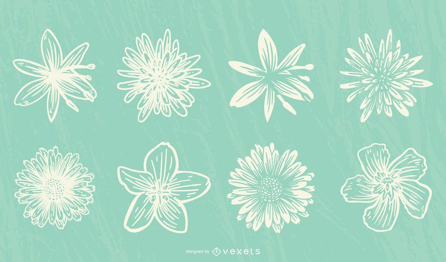 Colección de flores dibujadas a mano.