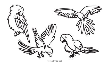 Desenhos do curso do papagaio