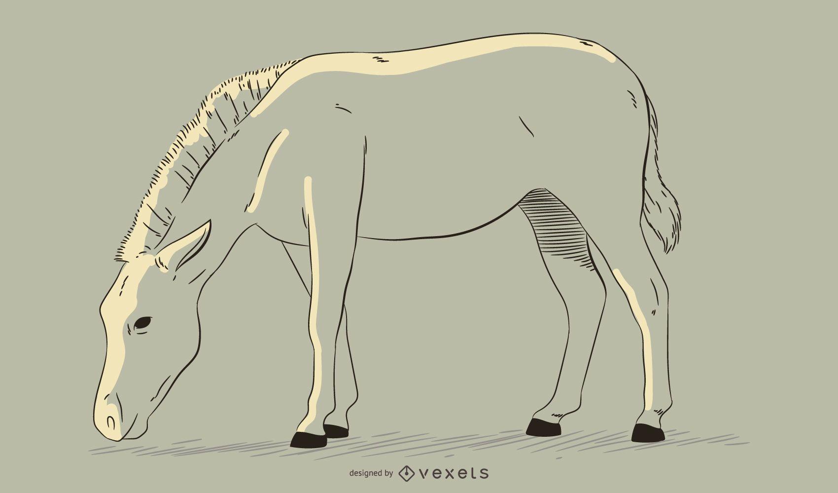 Zebra hand drawn illustration