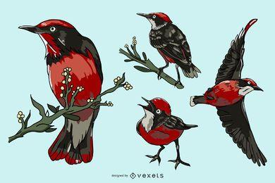 Conjunto de ilustración de pájaro rojo realista