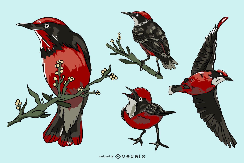 Realistic red bird illustration set