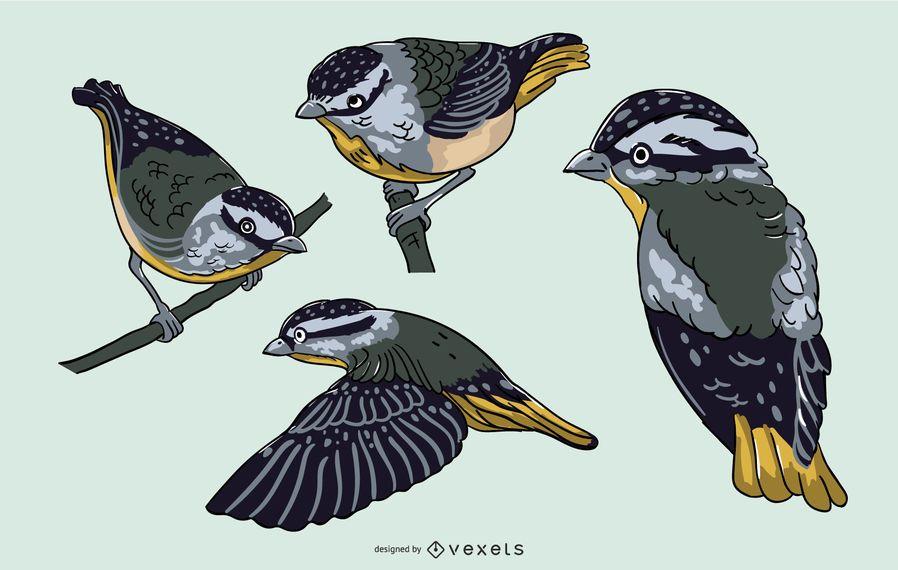 Realistic blue bird illustration set