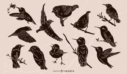 Coleção de ilustração realista de aves