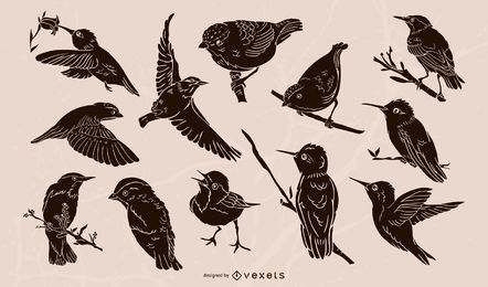 Realistic birds illustration collection