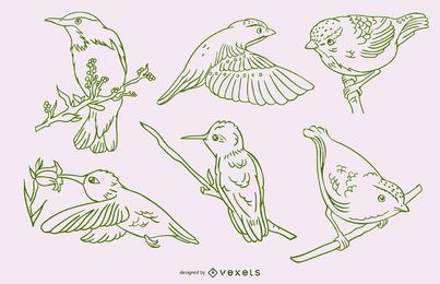 Conjunto verde realista de trazo de pájaros