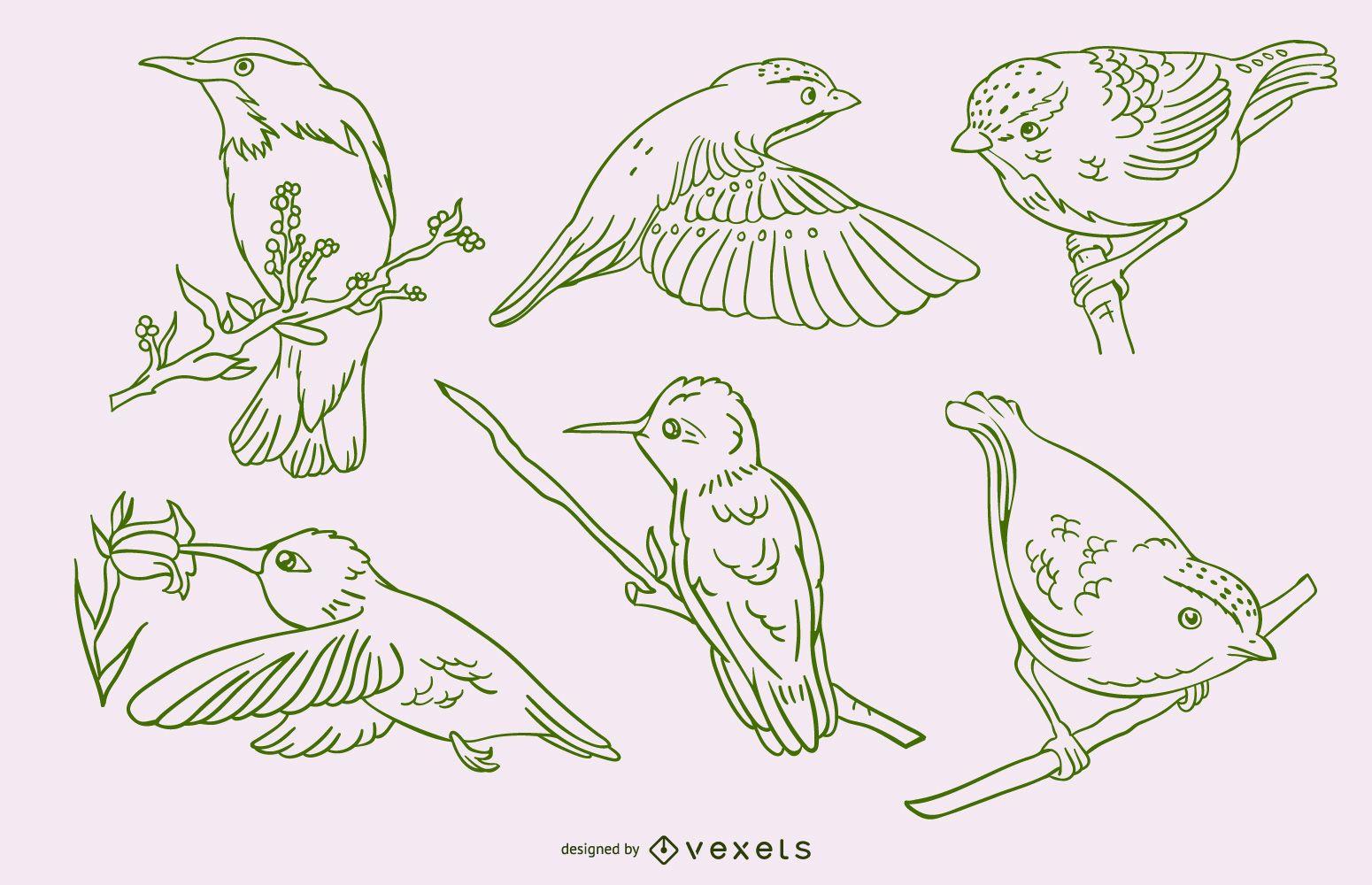 Realistic birds stroke green set