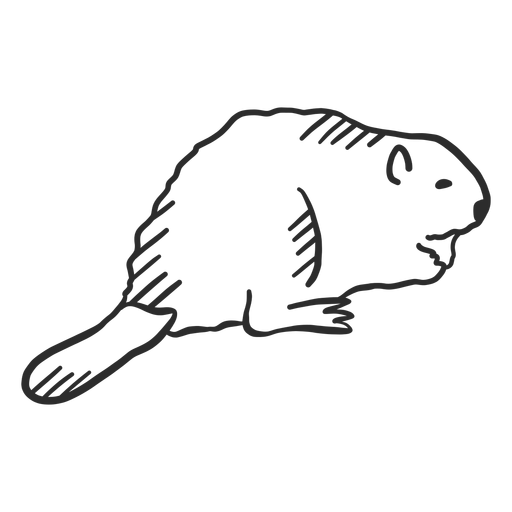 Beaver rodent tail doodle animal Transparent PNG