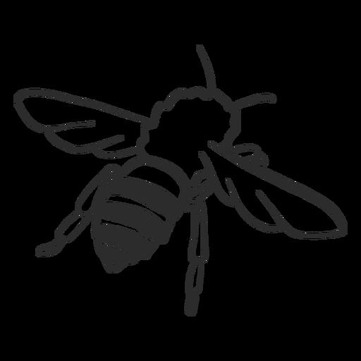 Abeja avispa raya ala insecto doodle Transparent PNG