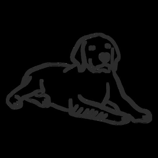 Cão cachorro orelha deitado doodle animal Transparent PNG