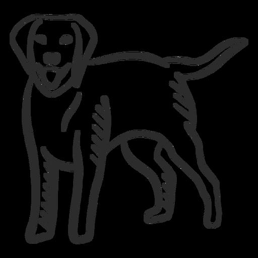 Cão filhote de cachorro cauda língua orelha doodle animal Transparent PNG
