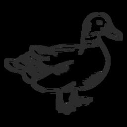 Duck Drake Wildente Schnabel Flügel Gekritzel Vogel