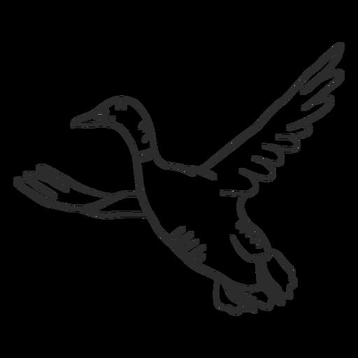 Duck drake wild duck beak wing flying doodle bird