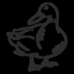 Duck Drake Wildente Flügel Schnabel Gekritzel Vogel