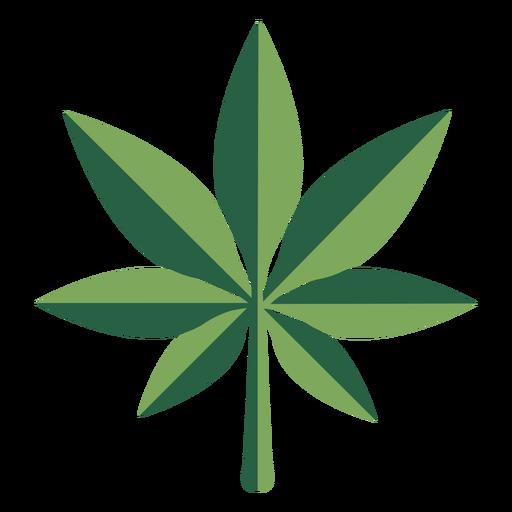 Planta plana de droga de marihuana de hoja de c??amo