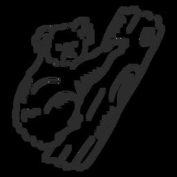 Coala nariz nariz ramo doodle animal