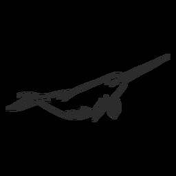 Narwal Stoßzahn Flipper Schwanz Gekritzel Säugetier