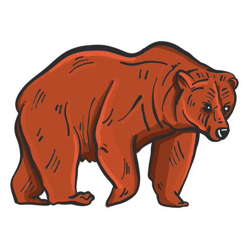 Bear fur grizzly colored sketch Transparent PNG