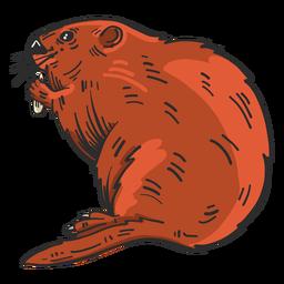 Dibujo coloreado de piel de castor