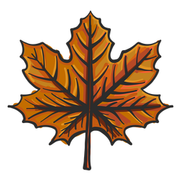 Leaf maple colored sketch
