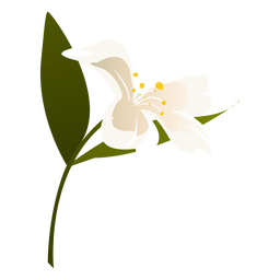 Schneeglöckchen Blume Blatt Blütenblatt flach