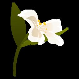 Snowdrop flower leaf petal flat