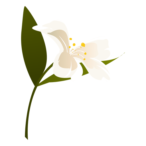 Schneeglöckchen Blütenblatt Blütenblatt flach Transparent PNG