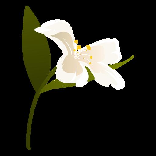 Snowdrop flower leaf petal flat Transparent PNG