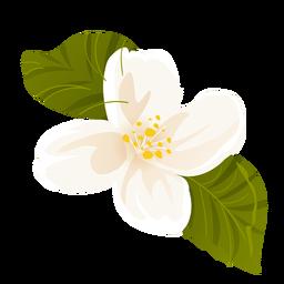 Snowdrop folha flor pétala plana