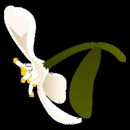 Flor de pétala de folha de floco de neve plana