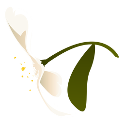 Snowdrop leaf petal flower flat