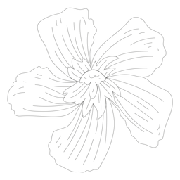 Flower petal line