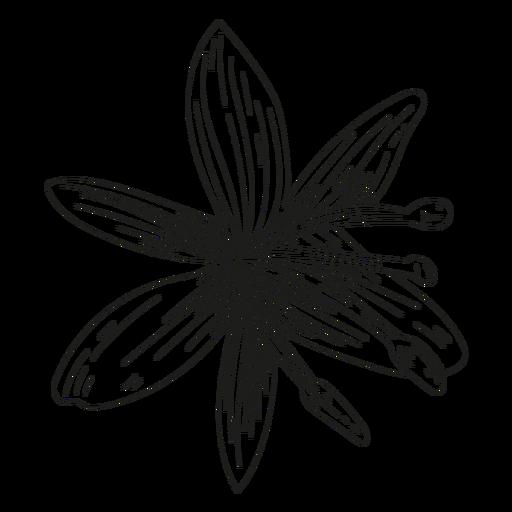 Flower petal stamen line