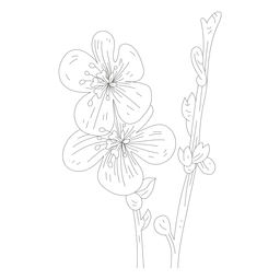 Linha de haste de pétala de estame de flor