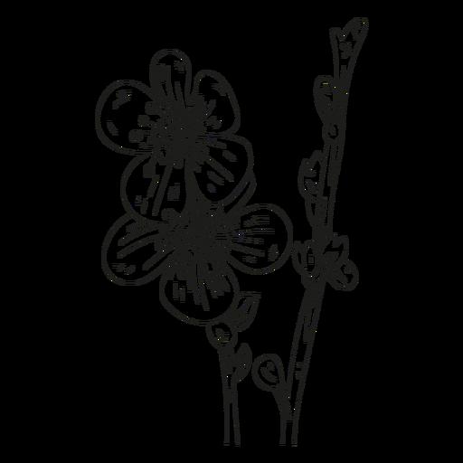 Flower stamen petal stem line