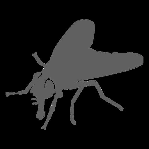 Fly wing proboscis silhouette