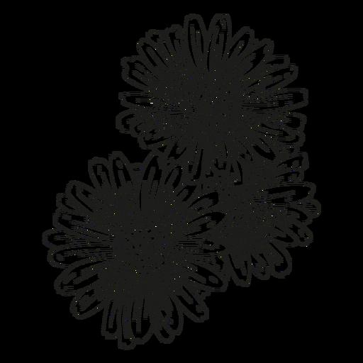 Petal flower gynoecium line