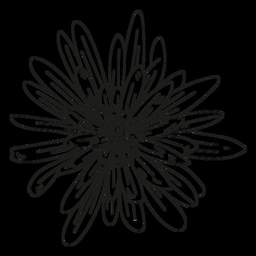 Petal flower leaf line
