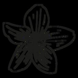 Linha de pétalas de flores