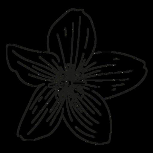 Petal flower line Transparent PNG
