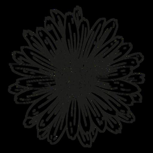 Petal gynoecium flower line