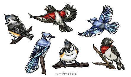 Pacote de ilustração realista de pássaros